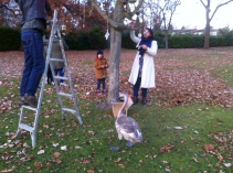 tree-dressing01