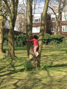 treeclimbing01