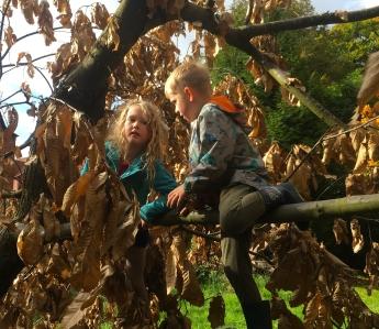 tree-climbing-crop2
