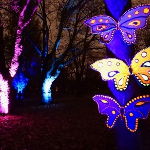 Butterflies-and-trees